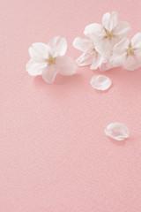 桜の花 桃色の布