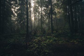 Rain forest mist on Stanley park Vancouver