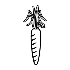 Carrot vegetable isolated