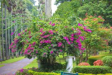 スリランカの花
