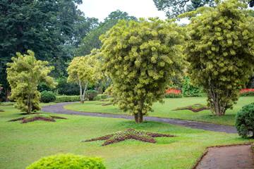 スリランカの植物