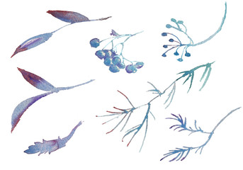 Collection of watercolor hand drawing winter rowanberry leaves