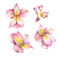 Watercolor set of pink flowers isolated on white background.