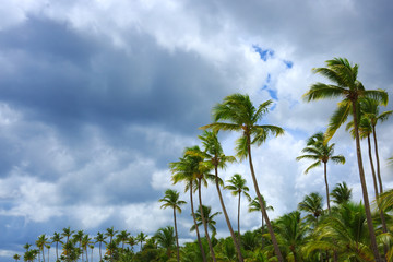 Sky with cloud closeup and Palm trees.