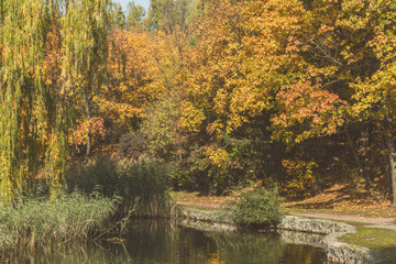 Autumn city park. Park in the fall. Ducks swim in the pond. Bright autumn trees in the park. Sunny day. Toned photo