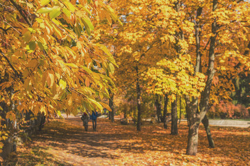 Couple walking along autumn alley in the city park