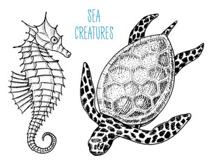 sea creature cheloniidae or green turtle and seahorse. engraved hand drawn in old sketch, vintage style. nautical or marine, monster or food. animals in the ocean.