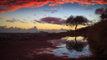 Fotobehang - Tree reflection puddle rain beautiful sunset clouds background. 4K UHD timelapse