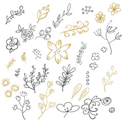Set of floral elements. Vector illustration.
