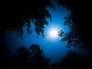 Glowing moon through clouds in the dark blue night sky with a tree in the background