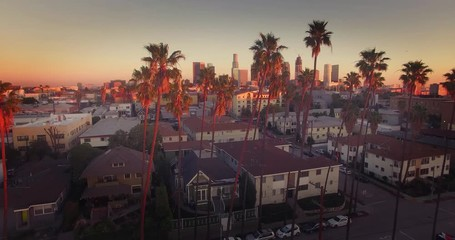 Fototapete - Aerial view downtown Los Angeles skyline revealing through row palm trees 4K UHD