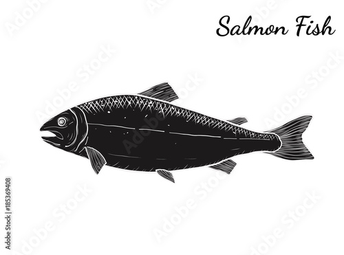 Line Art Of Fish : Salmon art highly detailed in line style.fish vector by hand