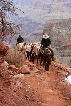 Grand Canyon Mule Convoy