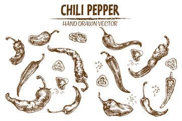 Digital vector detailed line art chili pepeper