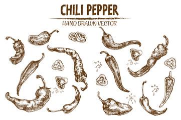 Digital vector detailed line art chili pepeper