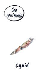 Squid, watercolor hand drawn, illustration