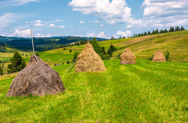 haystacks in a row on a grassy field. beautiful rural scenery in summer. ecological agriculture concept.