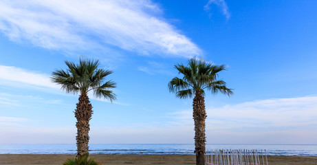 Two palm trees grow in the sand under Cyprus blue sky with few fluffy clouds.