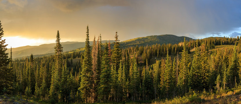 Summer landscape near Steamboat Springs, Colorado, USA.
