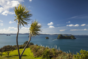 Blue sky and clouds over green coastal flora, New Zealand