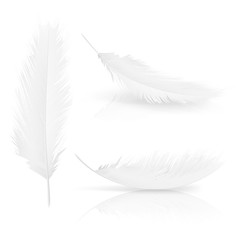 Realistic 3d white bird feathers set. Symbol of lightness, innocence, hope and heaven. Various Angel or bird detailed feathers collection. Vector isolated illustration on a white background.