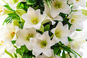 Bouquet of white lilies. Beautiful white lilies