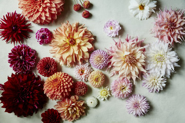 White Pink Orange Red Yellow Dahlias