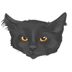Cat head, sketch vector graphic, cartoon style, isolated