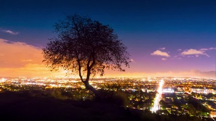 Fotobehang - Lone tree silhouette with Los Angeles cityscape in background at night, 4K UHD