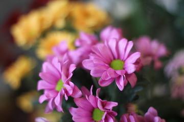 букет сиреневых хризантем, фотография