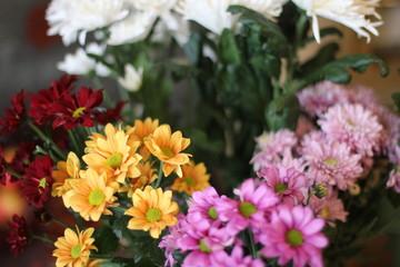 букет разноцветных хризантем, фотография