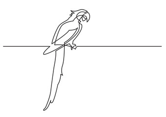 continuous line drawing of isolated vector object - parrot