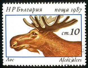 UKRAINE - circa 2017: A postage stamp printed in Bulgaria shows Eurasian Elk, Alces alces, Series Deers, circa 1987