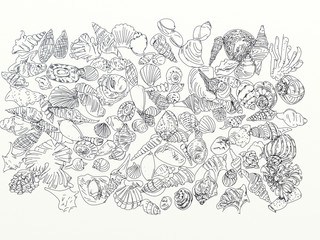 drawings of traces of shells and marine elements
