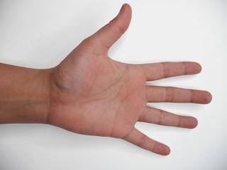 Fototapeta Otwarta dłoń europejska na białym tle
