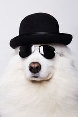 Dog in hat and sunglasses. Symbol of 2018 New Year