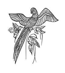Ornamental exotic bird hand drawn. Line art. Black and white vector illustration.. Parrot with fantasy flowers . T-shirt design print.