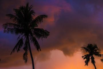 tropical view landscape with palm tree againtst sunrise.