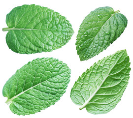 Four spearmint leaves or mint leaves. Collection. Clipping path.