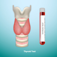 Test Tube With Blood For Thyroid Test And Healthy Thyroid. Endocrinology System Or Hormone Secretion. EPS10 Vector Illustration.