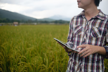 Agriculture farmer man hold tablet for read a report on rice agriculture Field with copy space,agriculture technology concept.
