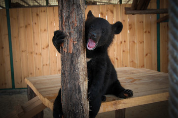 bear cub in the cage of the zoo