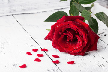 Single red rose witn small hearts on white wooden background