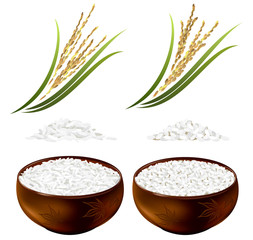 Set of rice plants and bowls with long-grained and short-grained rice. Hand drawn vector illustration on white background.