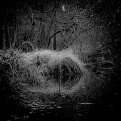 Hiver en bord de d'étang