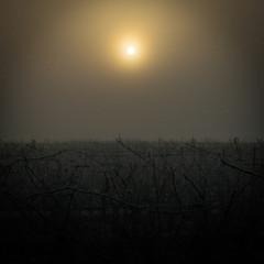 Lever du jour sur les vignes d'hiver