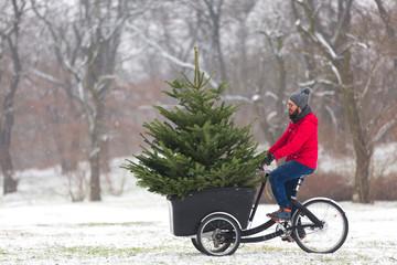 Man cycling home with a big Christmas tree