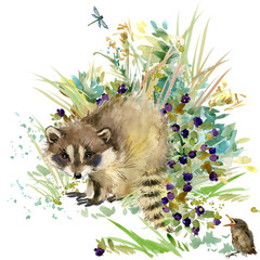 raccoon. forest animals watercolor illustration