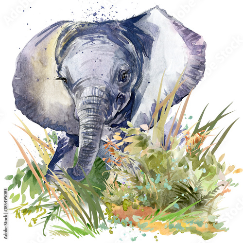 baby elephant. wild animals watercolor illustration