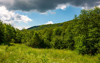 grassy meadow in forest on a cloudy day. lovely wild nature summer scenery in mountains. location Uzhanian National Nature Park, Ukraine